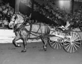 grandma driving horse and cart